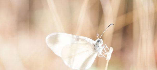 La vie, aussi fragile qu'une aile de papillon...